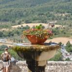 Colombe provençale
