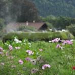 Le refuge des champs