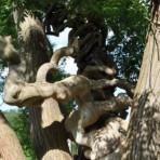 L'arbre rinho
